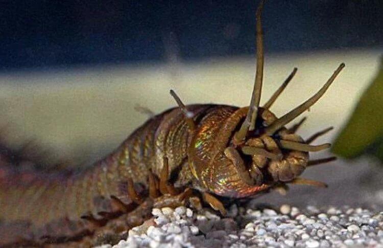 Ученые обнаружили на Тайване следы гигантских червей, которые существовали 20 миллионов лет назад
