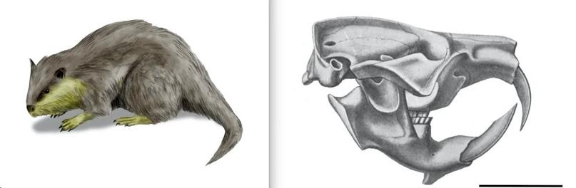 Палеокастор. Реконструкция предполагаемого облика и кости черепа