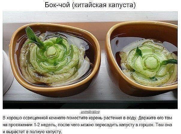 8 овощей, которые можно купить один раз, а...
