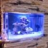 AquaSize - Аквариумный интернет-магазин