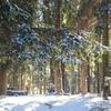 Боровляны - Защита Леса