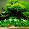 Аквариумные растения | АкваТрава.ру