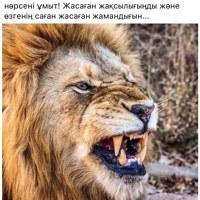 ЖанболатЖусипбеков