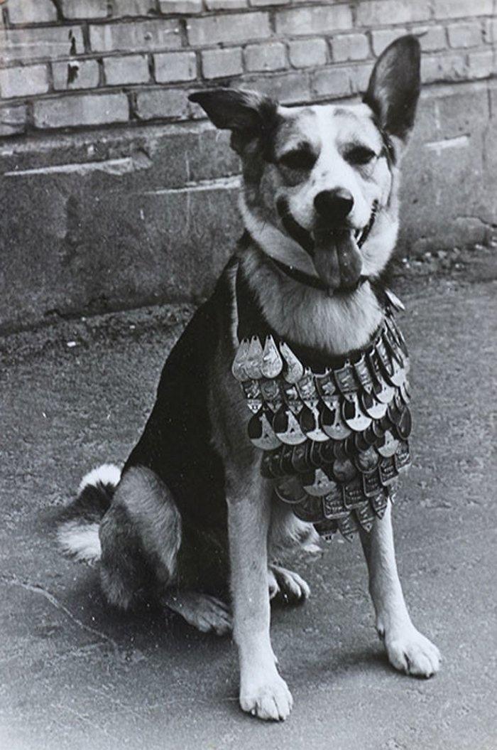Фильм «Собачье сердце», вышедший на экраны СССР в ноябре 1988 года, открыл сразу...