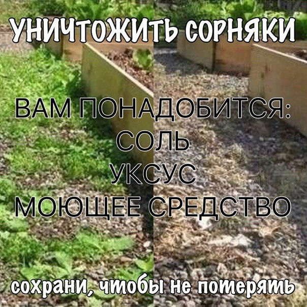 Уничтожить сорняки.  Чтобы уничтожить сорняки без гербицидов, используйте соль...