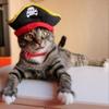 Котята в дар! Отдам котенка! Найду хозяина для к