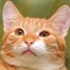 Заведи себе котэ. Кошки и котята в дар