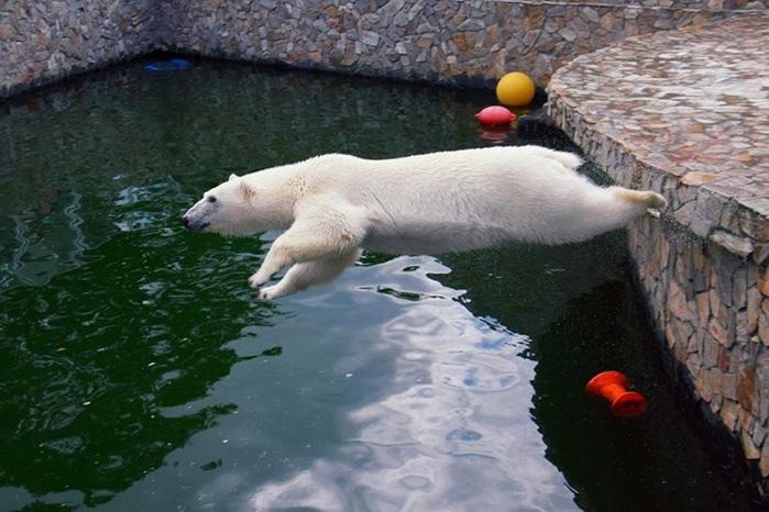 Выходить на лёд можно, если ты белоснежная медведица