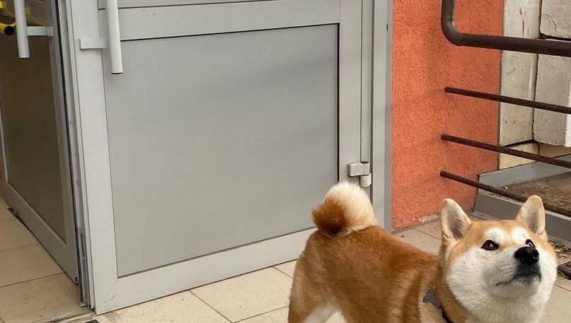 В Казани оборудованы избирательные участки, где можно проголосовать с собаками