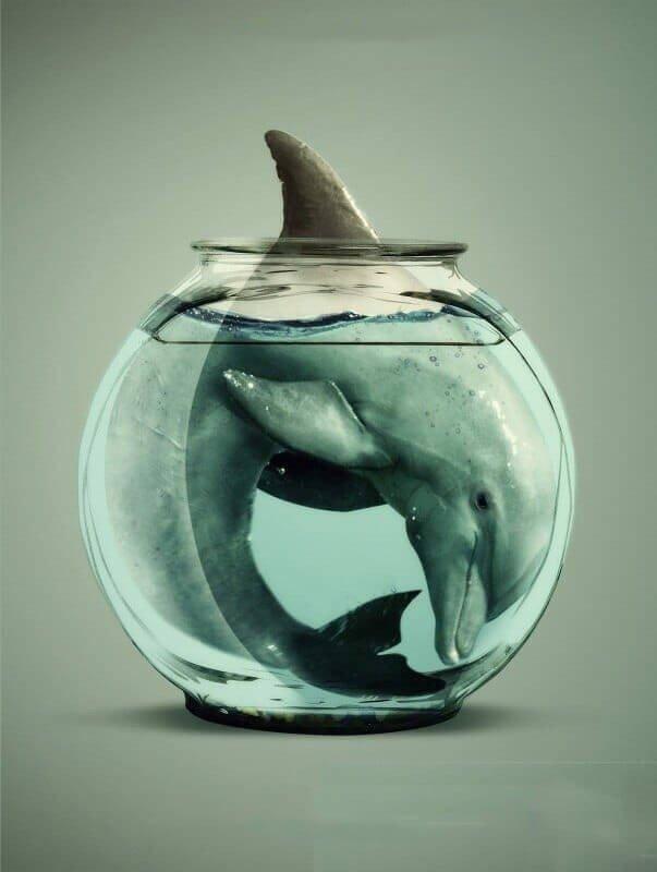 Дeльфины в неволе