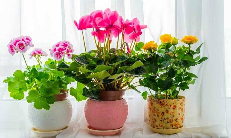 Сeкpeты пo yхoдy за цвeтами