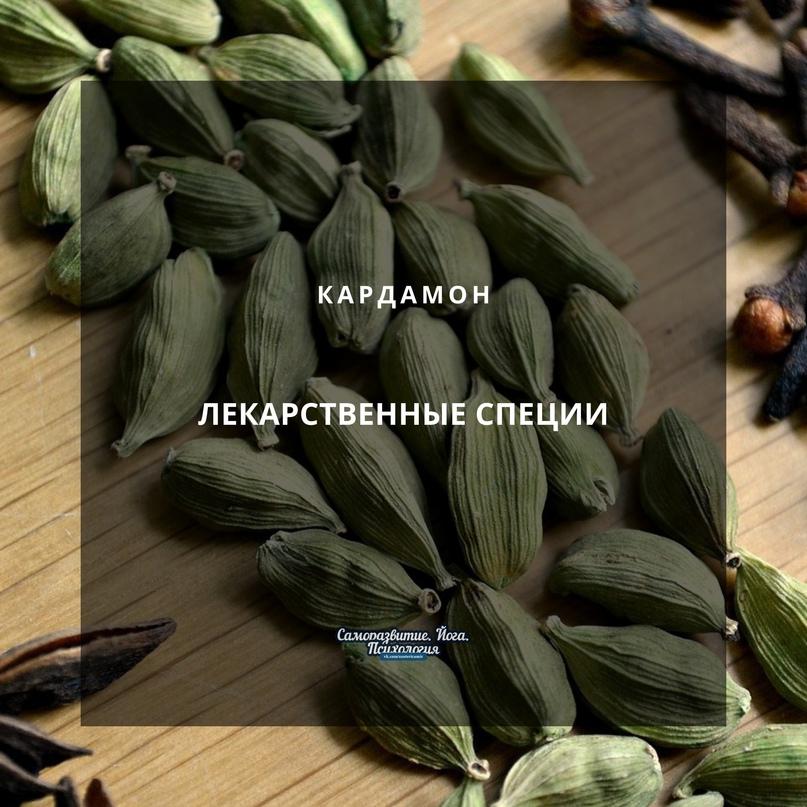 Лекарственные специи – кардамон