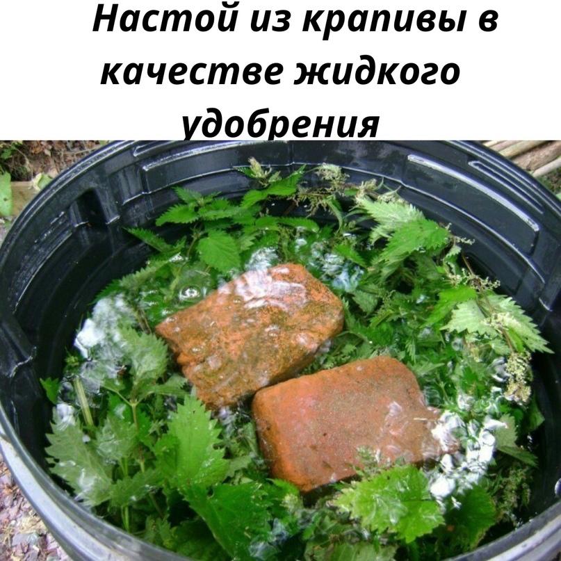 Народный рецепт, применяем для удобрения растений.📌