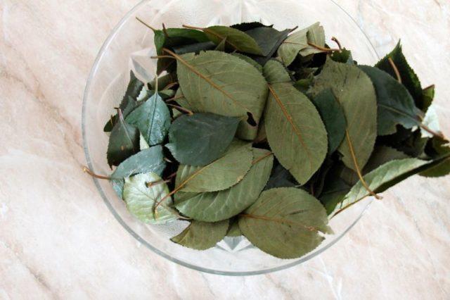 Польза и вред чая из вишневых листьев.