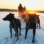 Тур на собачьей упряжке 20 км!