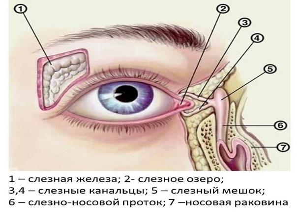 СЛЕЗЯТСЯ ГЛАЗА  Слезятся глаза – это довольно распространенная жалоба. Отмечая, что глаза стали слезиться, мы, на самом деле, реагируем на усиленное слезоотделение. Слезотечение, когда слезы наполняют конъюнктивальный мешок (полость между г...