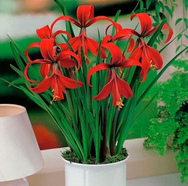 Сегодня знакомим вас с еще одним чудесным цветком