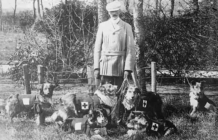 Псы милосердия Первой мировой: Как четвероногие санитары героически спасали людей.