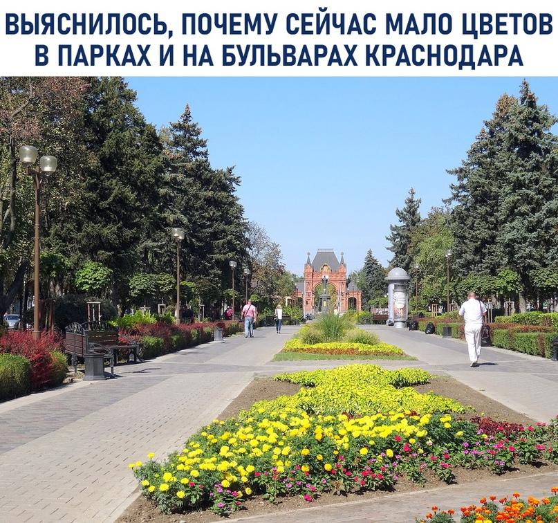 Выяснилось, почему сейчас мало цветов в парках и на бульварах Краснодара