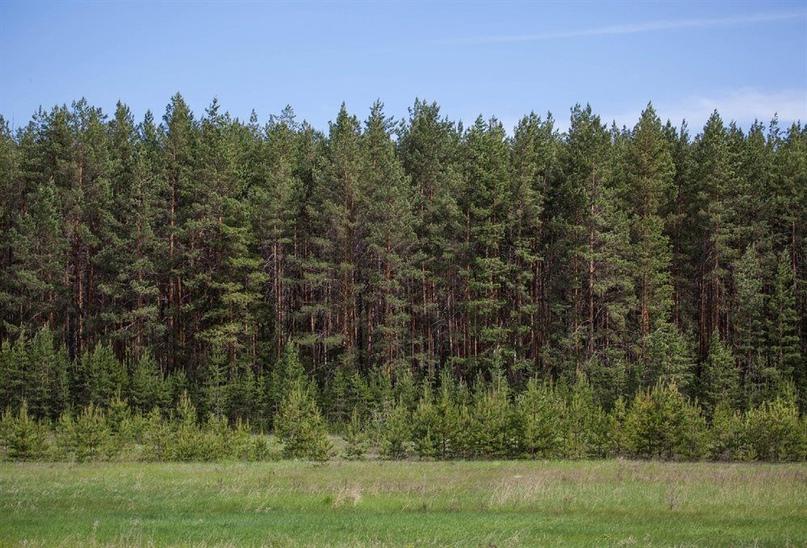 В Ульяновске пройдёт Всероссийский форум «Цифровая трансформация лесного комплекса - 2021»