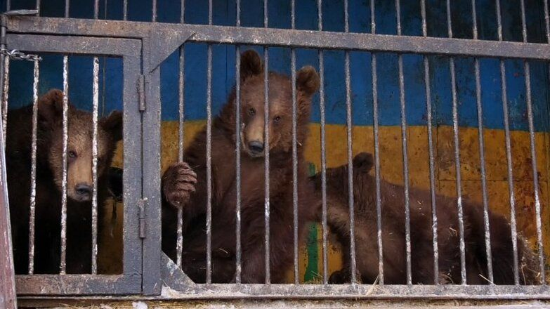 В Новотроицке на свет появились три бурых медвежонка