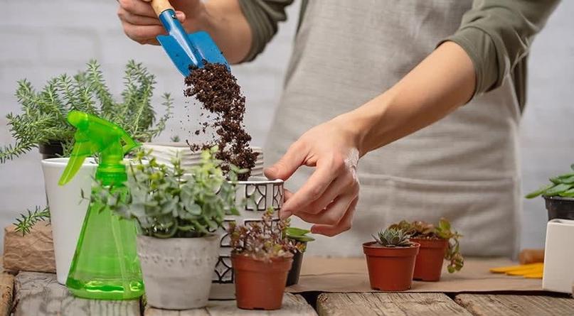 Совет: Пересаживайте цветок после покупки!
