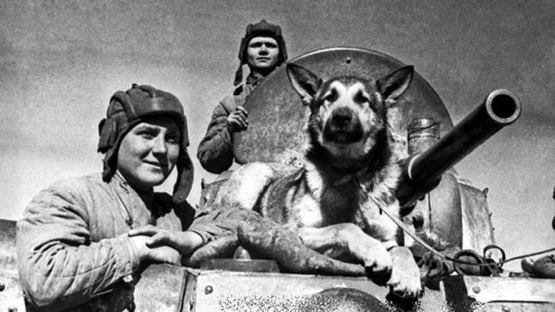 Давайте вспомним о собаках, которые воевали наравне с людьми. Несправeдливо было...
