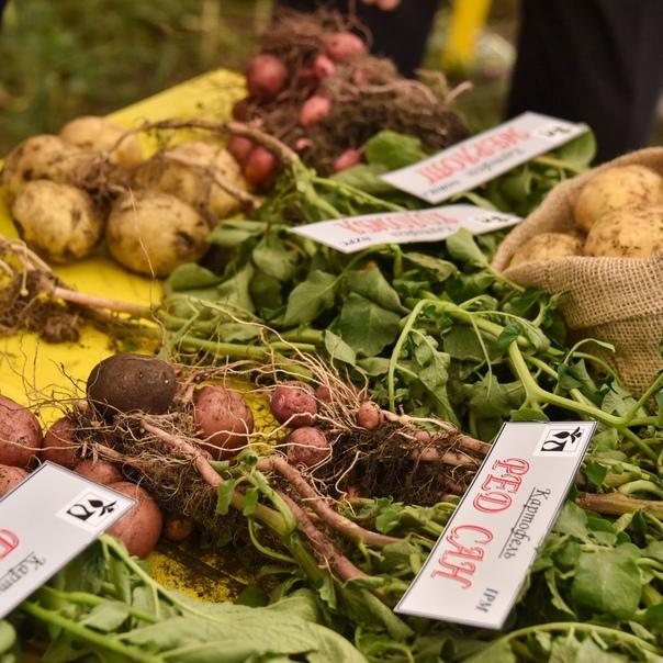 Сельскому хозяйству - режим ЧС  В этом году чрезвычайно засушливое лето уже привело к потерям почти... [читать продолжение]