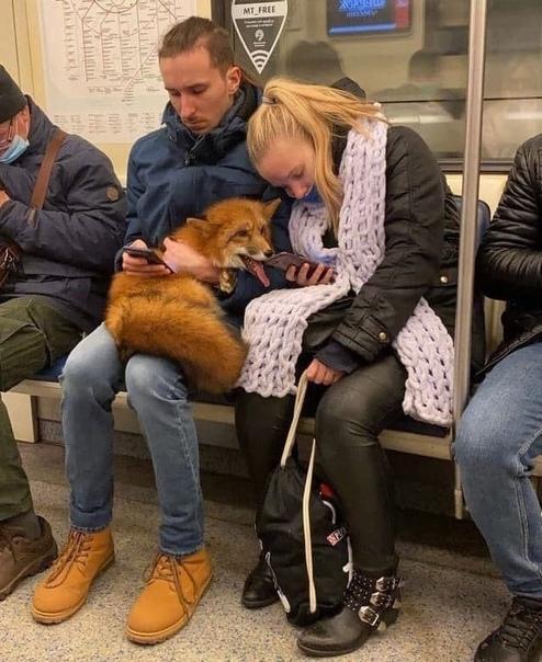 красавица, залипающую в телефон хозяйки в метро ???? Москва
