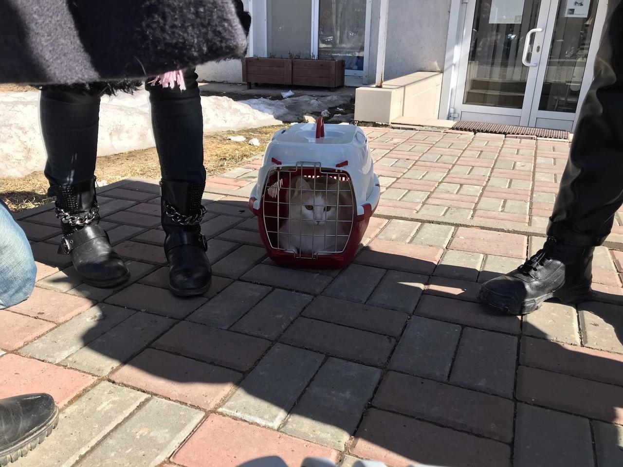 В российском городе 12 кошек просидели 11 дней взаперти из-за долгов хозяйки