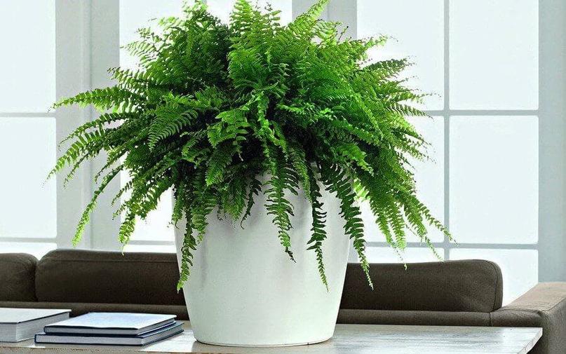 Папоротник – одно из самых древнейших растений на земле. В природе произрастает...