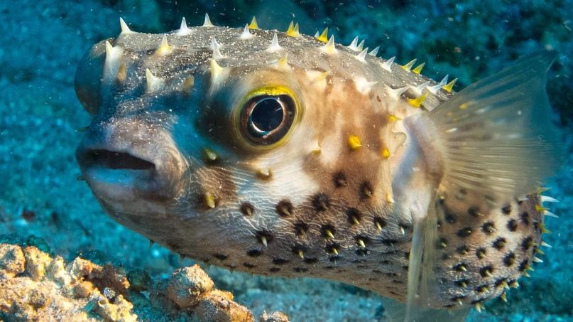 У берегов Турции – нашествие смертельно ядовитых рыб.