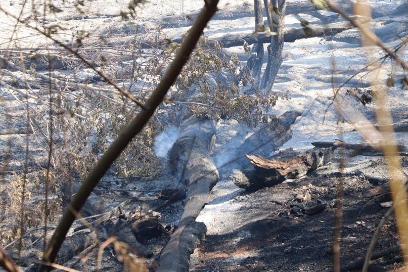 254 тонны воды уже сбросили на горящую Протопоповскую рощу Оренбурга