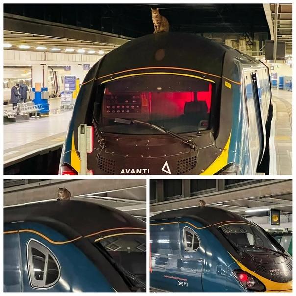 Максимальную клиентоориентированность показали британские железные дороги.   На крышу...