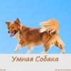Зоопсихолог - Позитивная дрессировка собак, Крым