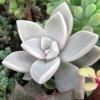 Суккуленты и другие растения