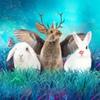 Пальмира Керлис. Книги и всякое с кроликами