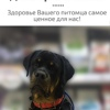 Ветеринарный центр доктора Быкова | Ярославль