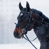 LETO-photografia|конная фотография||анималистика