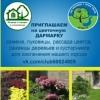 Цветочная Дармарка | Садовый Фримаркет