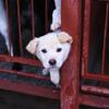 Собаки на пристройство из отлова Тулы и области