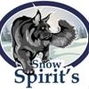 Питомник кошек породы Мейн -кун   SNOW SPIRIT`S