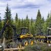 Куплю лес|Продам лес|лесная промышленность|