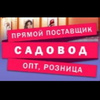 Anushervon Rahimov