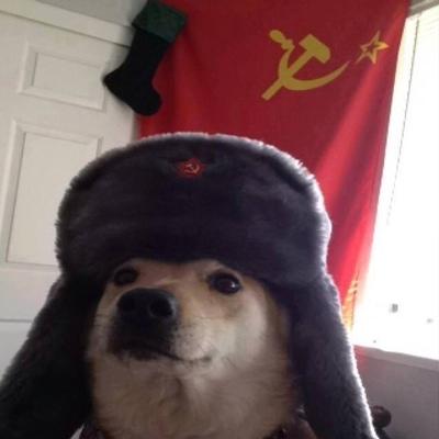 Пёс Смердящий, Калининград