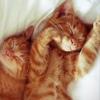 Кошки Онлайн | Истории про кошек | Юмор