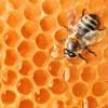 Купить Мёд в Краснодаре | Sladomed.ru