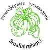 Smallairplants - Атмосферные Тилландсии