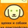 Усатые-Полосатые ищут дом! Собаки и щенки