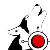 Катание на собачьей упряжке   ХАСКИ   Пермь